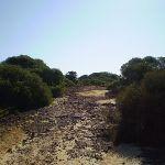 Track near Anzac Rifle Range Maroubra (18216)