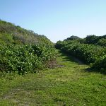 Grassy track near Maroubra Bay (18288)