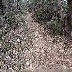 Track near Gladstone Rd (186402)