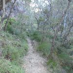 Track between Lyrebird Dell and Pool of Siloam (186717)