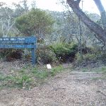 Top of Lyrebird Dell track (186915)