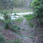 Leura Oval track down to management trail (187005)