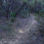 Narrow track (187197)