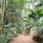 Surrounded by cabbage tree palms (192014)