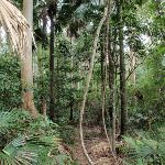 Rainforest in Strickland (192290)