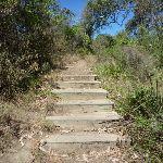 Steps (196211)