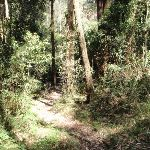 Plenty of vines on the rainforest walk (199300)