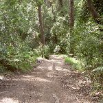 Graham Drive Track to Little Beach (20030)