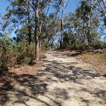 Dry forest on the ridgetop (201883)