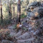 Steps around the boulders (203515)