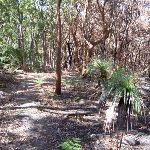 Bullimah Track's burnt bush (20381)