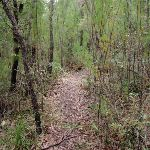 Through the scrub on the Highway Ridge trail (205849)