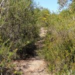 Highway Ridge track (206359)