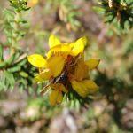 Wildflower (206602)