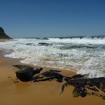 Along Forresters beach (207091)