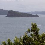 Lion Island from Box Head bushtrack (21044)