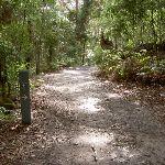 Little Beach service trail (21275)