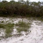 Sandy caldasac on the headland (21500)