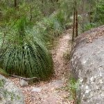 Track between rock and grass tree (21539)