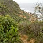 Bouddi Coastal Walk to Caves Bay (21584)