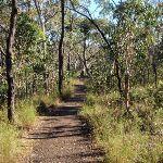 winding through the bush (216911)