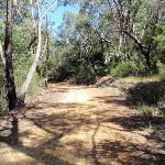 Walking along the Pearl Beach / Patonga fire trail (218459)