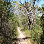 On Patonga track just west of Pearl Beach / Patonga fire trail (218582)