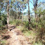 Patonga Track (218825)