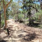 along Pearl Beach / Patonga fire trail (219410)