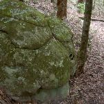 Turtle Shell Rock (22010)