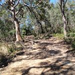 Old management trail (221012)