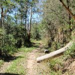 Simpsons track inside Dharug National Park (221723)