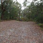 walking through clearing (225439)