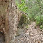 Tree grasping a rock (225628)