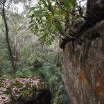 Ferns growing on rock (225664)