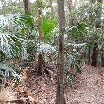 Palms on Toomey Walk (225901)