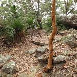 Winding around the top of the ridge on Graves Walk (227050)