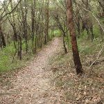 Guringai Walk (227428)