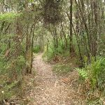 Guringai walking track (227458)