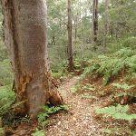 Lovely fern filled forest (227473)