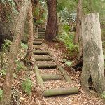 Timber steps on the Guringai Walk (227737)