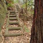Timber steps on the Guringai Walk (227743)