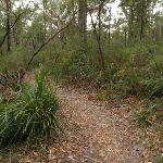 Mouat walking track (227941)
