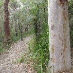 Mouat Walk (228049)