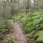 ferns on the Mouat Walk (228079)