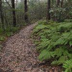 Ferns along Mouat Walk (228088)