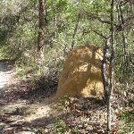 Termite Mound (233918)