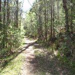 Trail near Sandringham Close (234893)