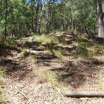 Walking up the ridge on Sandringham track (235328)
