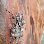 Cicada on tree (238088)